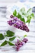 Sprig of lilac in a vase