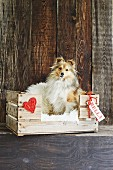 Dog in dog bed made from wooden crate decorated with heart and name tag