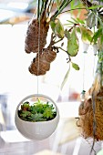 Miniature succulents in decorative suspended planter