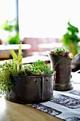 Metallgefässe dekorativ bepflanzt mit Sukkulenten auf Balkontisch