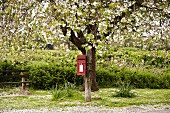 Red postbox mounted on blossoming tree and bench in front of field of dense plants