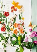 Süssigkeiten in Blütenform auf Pflanzenzeichnung als Wanddeko