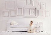 Empty picture frames on white wall above sofa and Afghan hound sitting on floor