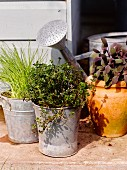 Potted kitchen herbs on terrace