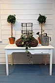 Small potted trees, watering can and basket of ivy on white table with drawer