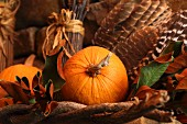 Autumnal still-life arrangement with pumpkins and feathers