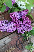 Branches of flowering lilac and shears on weathered wooden table