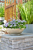 Stone dish planted with purple ageratum on stone plinth in garden
