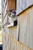 Katze auf Fensterbank