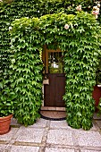 Front door surrounded by roses and Virginia creeper