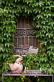 Window with wrought iron grille surrounded by Virginia creeper and ceramic hen on metal stand