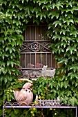 Mit wildem Wein beranktes Fenster mit schmiedeeisernem Gitter, davor Keramikhahn auf Metallgestell