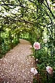 Gravel path below rose-covered arbour