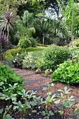 Gartenweg aus alten Eisenbahnschwellen & Kies in dicht bepflanztem Garten mit Palmen