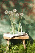 Dandelion clocks in glass bottles on rustic wooden footstool outdoors