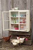 Hens below wall-mounted cabinet hand-made from old windows