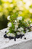 Blossoming myrtle branch & dried myrtle berries on stone wall outdoors