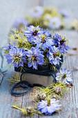 Love-in-a-mist flowers (Nigella damascena) in tin wrapped in wool
