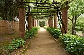 Kolonnade im Garten der Villa Cimbrone mit berankter Holzkonstruktion als Abdeckung