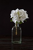 White hydrangea in vintage glass bottle against dark background