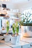 Hyacinths in three white-painted flowerpots; kitchen in background