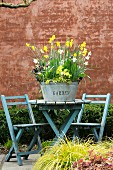 Zinc tub planted with spring flowers on garden table