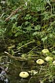 Apfel im Teich