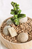 Oriental-style arrangement of Crassula, pebbles, Buddha plaque and pieces of cork in wooden bowl