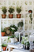 Small olive trees on plant shelf against wallpaper with botanical pattern
