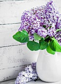 Bouquet of lilac in white jug against wooden wall