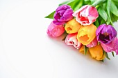 Colourful bouquet of tulips on white surface