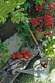Harvested vegetables and flowering plant on weathered wooden board next to watering can