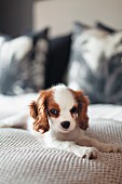 Small dog lying on bed