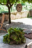 Fresh head of lettuce on garden table