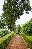 Low, clipped hedges lining gravel path in landscaped garden