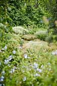 Ausschnitt eines eingewachsenen Sommergarten mit Gräsern und Unterholz