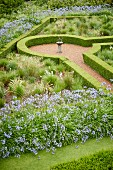 Beds of agapanthus and clipped hedges in geometric, relaxation garden