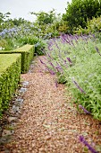 Gravel path next to clipped hedge in flowering garden