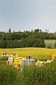 Festlich dekorierte Tische an blühendem Rapsfeld mit Landschaftsblick