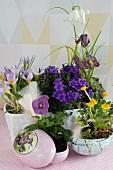 Frühlingsblumen in Dekoostereiern und weisser Keramikschale gepflanzte