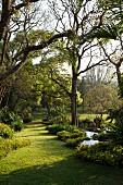 Sonnenbeschienener Rasenstreifen in subtropischem Garten mit Palmen
