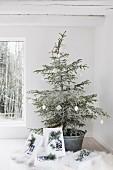 Weihnachtsbaum in Zinkwanne mit weißen Geschenken