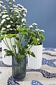 weiße und Grüne Chrysanthemen in Vasen auf Blau-weißer Tischdecke