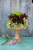An autumnal flower arrangement made from hydrangeas, vine leaves and chrysanthemum flowers