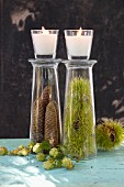 Pine cones and chestnuts in display glasses