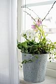 German primrose and snake's head fritillary on windowsill