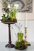 Frühlingsblumen mit Moos dekoriert in Pflanzenschalen