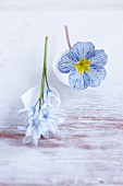 A blue spring flower with egg shells as table decoration