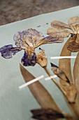 Pressed irises