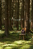Wooden chair below tree in small woodland clearing with postcards hung from string